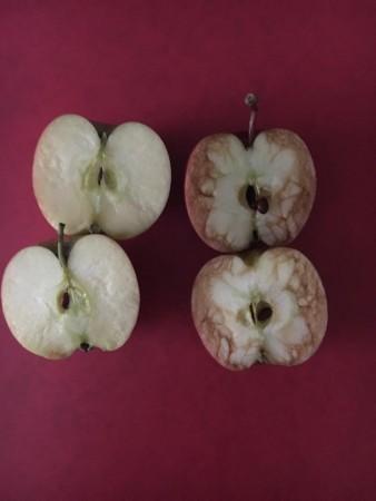 manzanas-profesora-bullying-338x450
